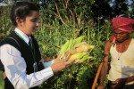 corn cob water purifier (2)