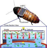 cyborg cockroach wireless sensor network