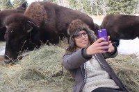 bisonmain