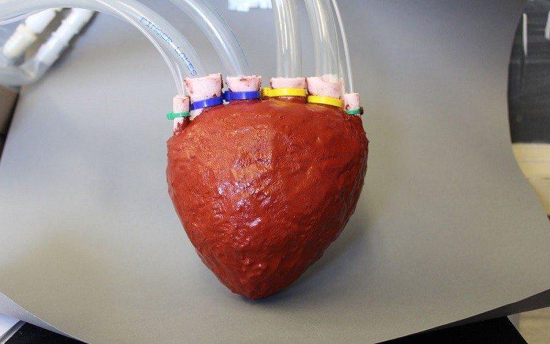 artificial-foam-heart-cornell