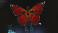 wingsOfKokabiel