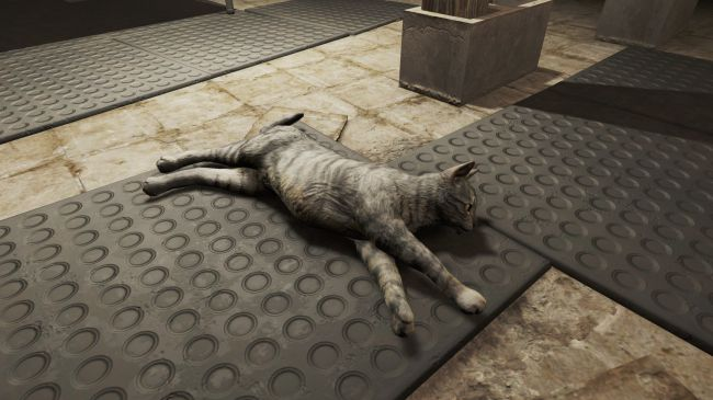 Fallout 4 Mod Does What Really Matters - Adds More Realistic Cats