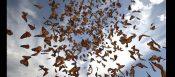 weather butterflies