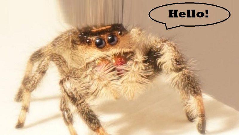 spider jump robot