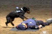 dog cpr police