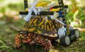 turtle lego