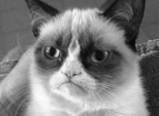 Internet Meme Legend Grumpy Cat Dies at Age 7